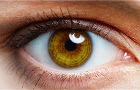 26 de Maio – Dia Nacional de Combate ao Glaucoma
